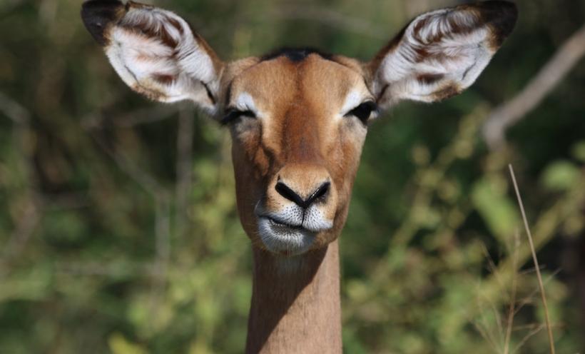 deer funny face